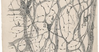 Beautiful Brain: The Stunning Drawings of Neuroscience Founding Father Santiago Ramón y Cajal