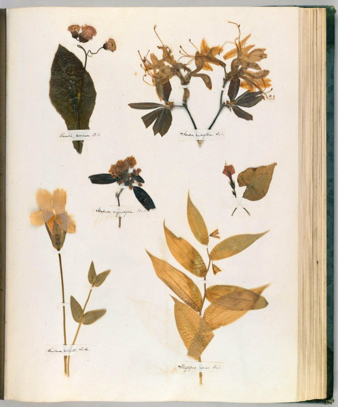 Emily Dickinson's Herbarium: A Forgotten Treasure at the