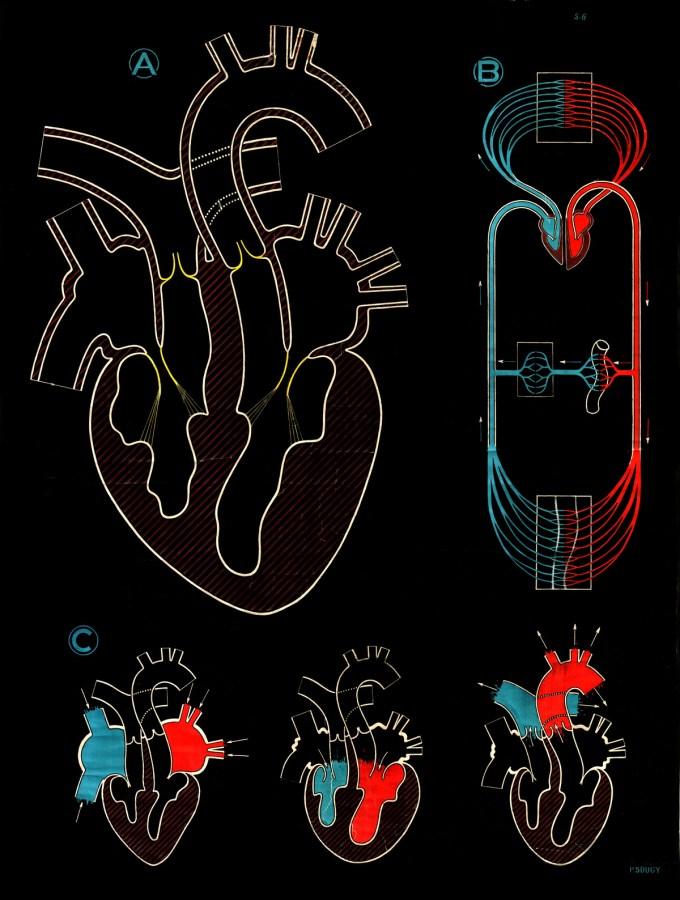 sougy_heart.jpg?resize=680%2C900