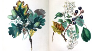 The Spirit of the Woods: Poet and Painter Rebecca Hey's Gorgeous 19th-Century Illustrations for the World's First Encyclopedia of Trees