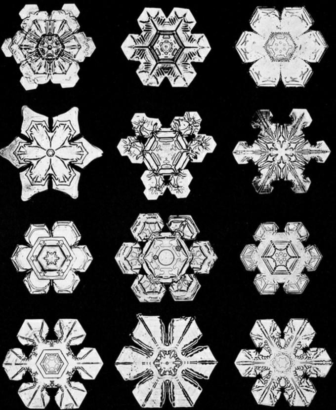 wilsonbentley_snowflakes13.jpg?resize=680%2C831