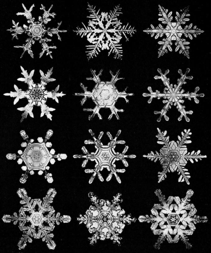 wilsonbentley_snowflakes24.jpg?resize=680%2C816