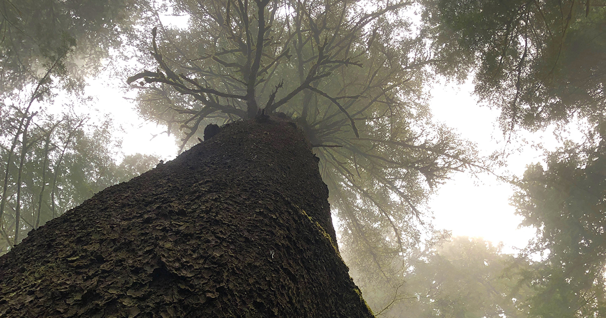 The Music of Trees: Improvisation, Iteration, and the Science of Immortality
