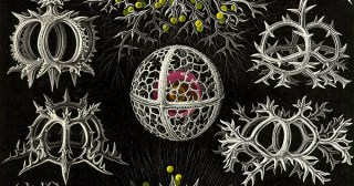 Against Aloneness in the Web of Life: Ernst Haeckel, Charles Darwin, and the Art of Turning Personal Tragedy into a Portal to Transcendence