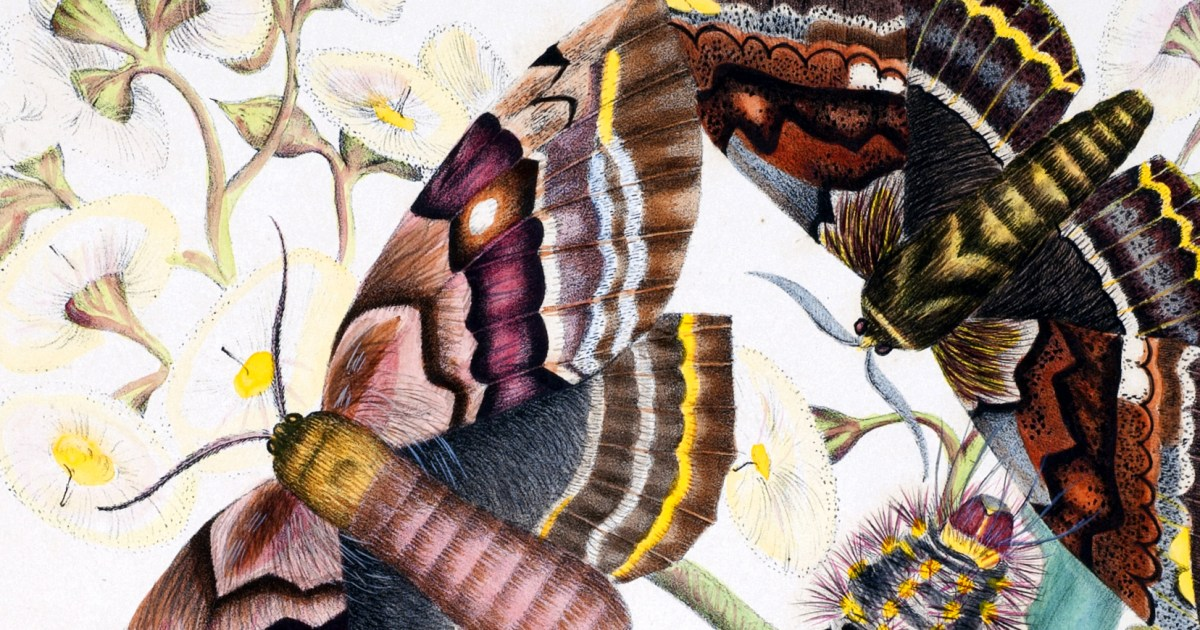 The Science and Splendor of Australian Butterflies: How Two 19th-Century Teenage Sisters' Forgotten Paintings Led to a Triumph of Modern Conservation