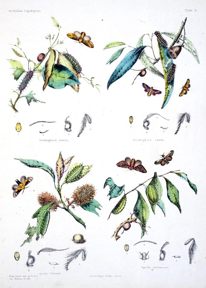 AustralianLepidoptera_Scott5_sm.jpg?resize=680%2C949