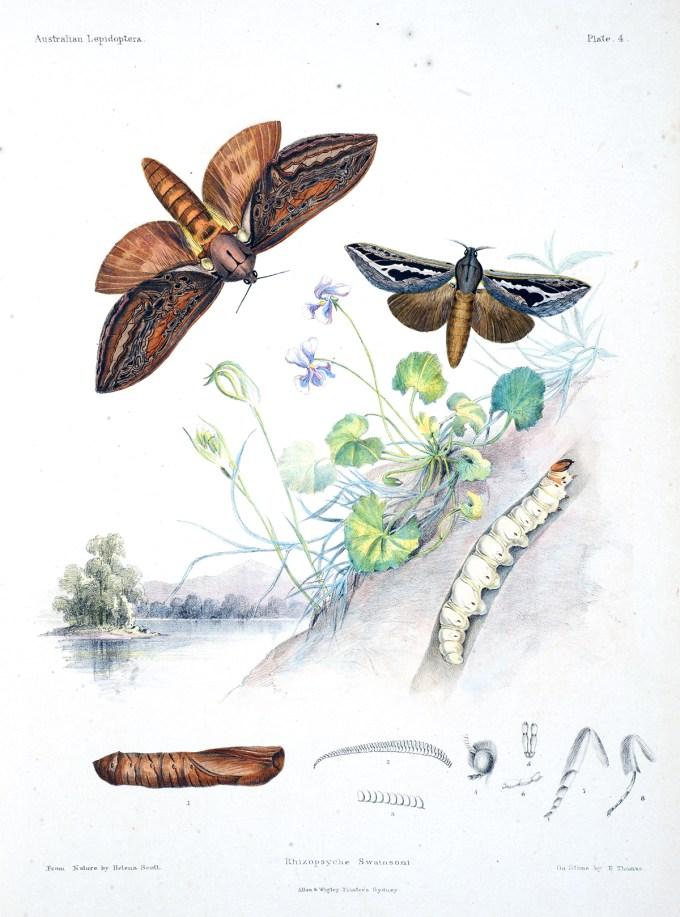 AustralianLepidoptera_Scott7_sm.jpg?resize=680%2C917