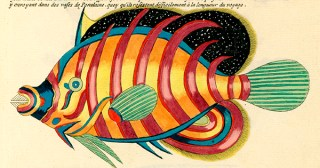 Psychedelic Fishes from the World's First Natural History Encyclopedia of Marine Creatures Illustrated in Color