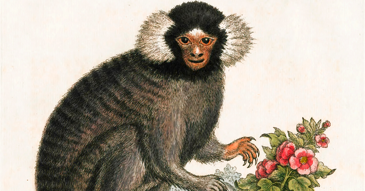 250-year-old Natural History Illustrations of Some of Earth's Strangest, Sweetest, and Most Otherworldly Creatures