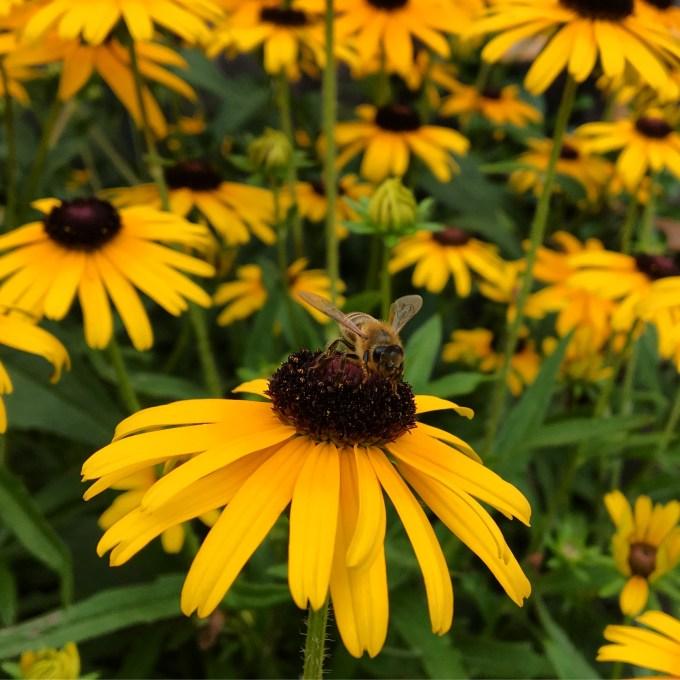 honeybee_MariaPopova.jpg?resize=680%2C680