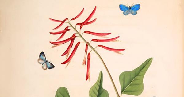 Mariposas Monarcas - cover