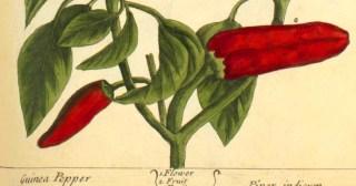 The Secret of Happiness: Bronson Alcott on Gardening and Genius