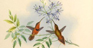 Between Science and Magic: How Hummingbirds Hover at the Edge of the Possible
