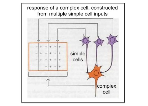 complex cell model
