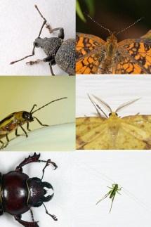 Insect_antennae_comparison