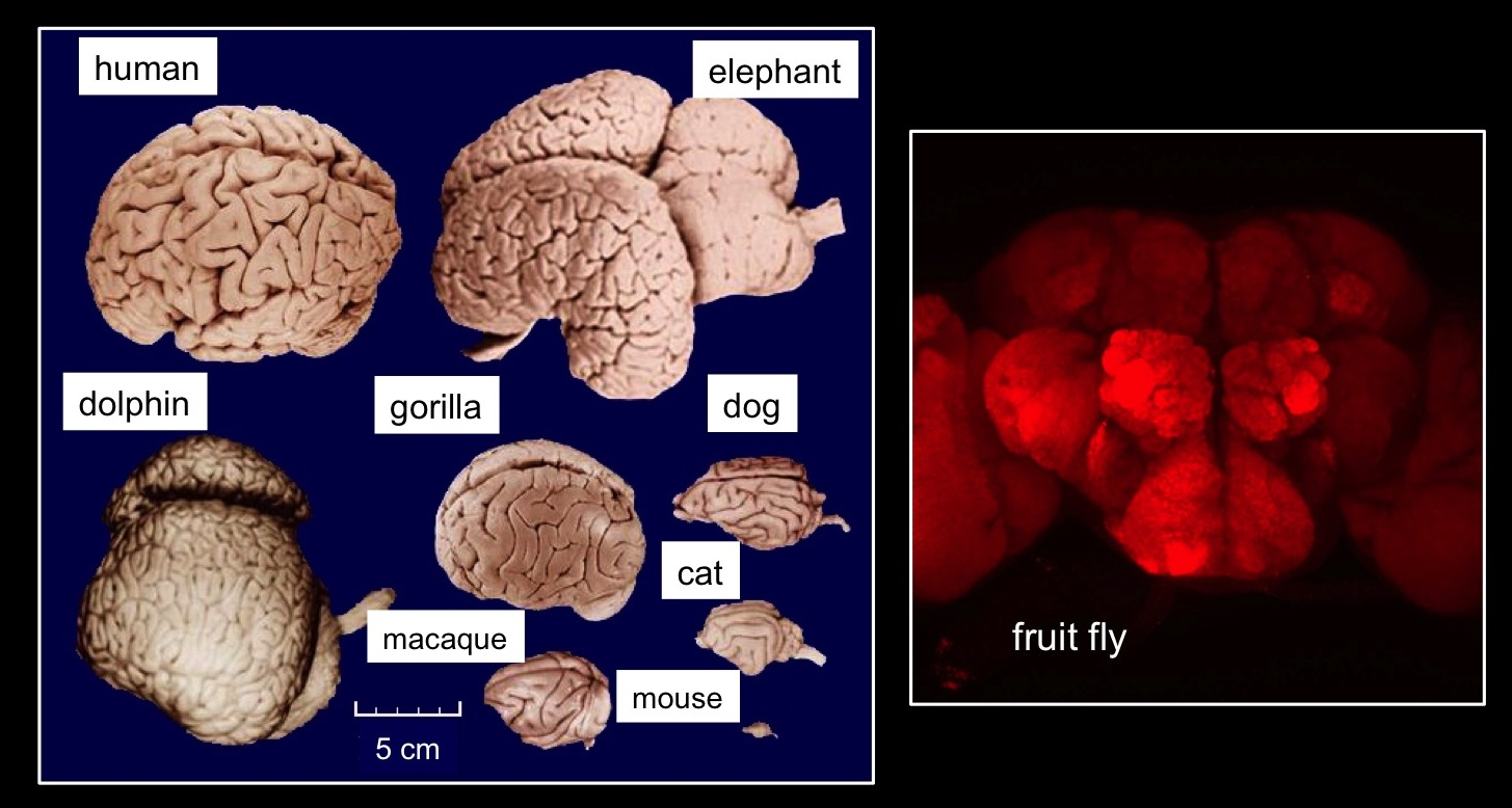 With Fruit Flies, Researchers are Gaining New Insights ...
