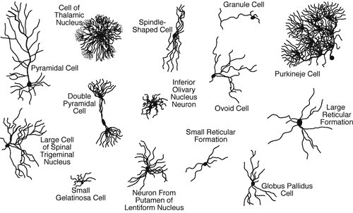 neuron shapes