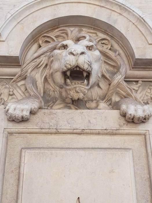 leeuw, vechten, winnen, brainstormen, leeuw, alles, geven, nemen, 100, procent, beste, beter, allerbeste, klasse, stijl, nietsontziend, helemaal