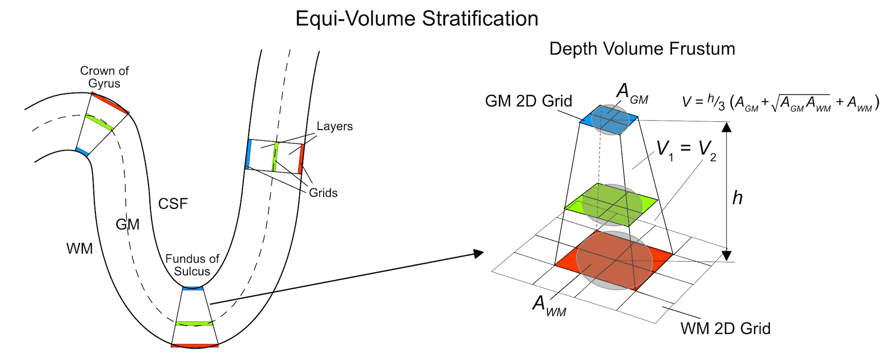 hight resolution of  2017 illustrates the principle of equi volume cortical depth sampling for grids as implemented in brainvoyager the schematic explanation uses 3 grids