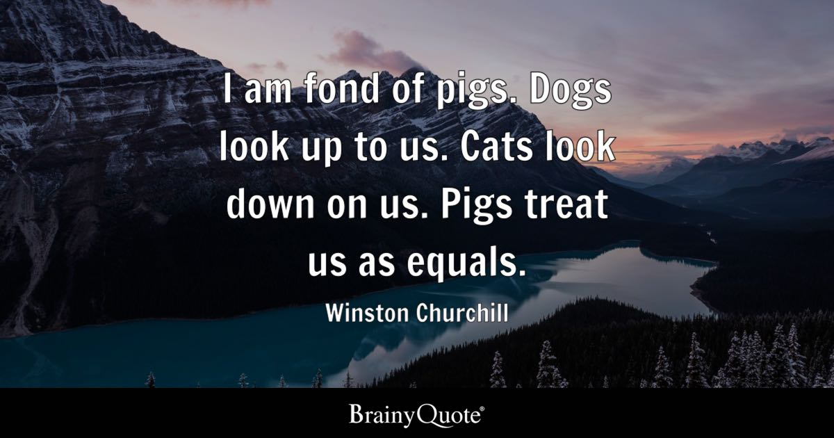 My Life My Rules My Attitude Wallpapers For Girls Winston Churchill I Am Fond Of Pigs Dogs Look Up To Us