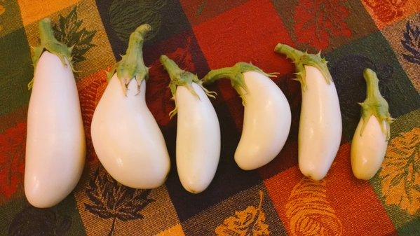 [image: six small white eggplants]