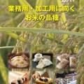 業務用・加工用に向くお米の品種 表紙