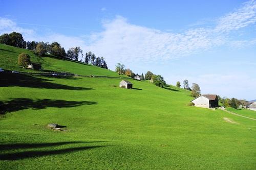 牧草の写真