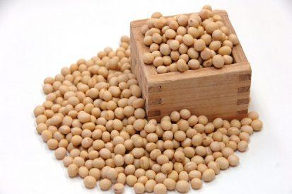 佐用もち大豆の写真