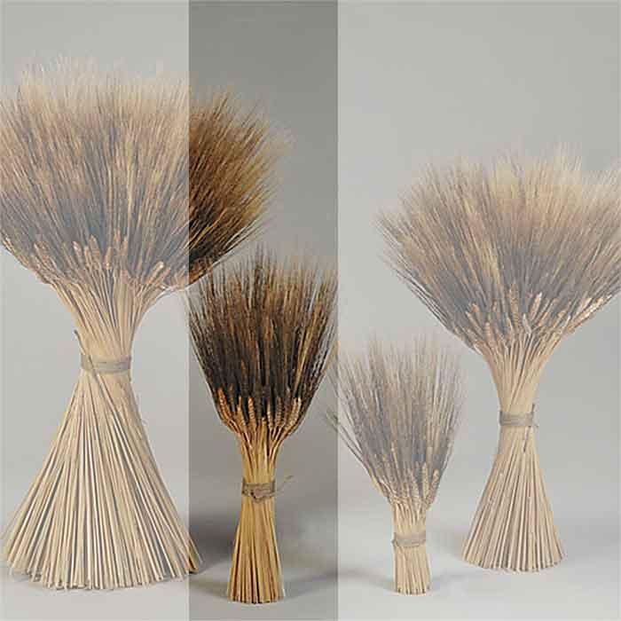 wheat sheaves 6 sheaves