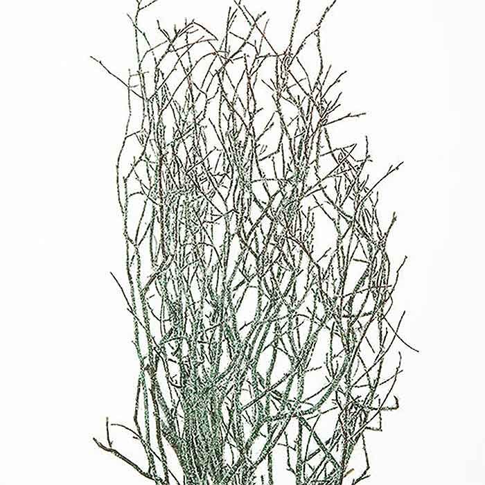 Sweet Huck Branches Green Winter Sparkle