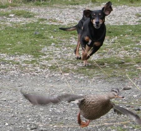 brancomisto Addestramento cani a ROMA