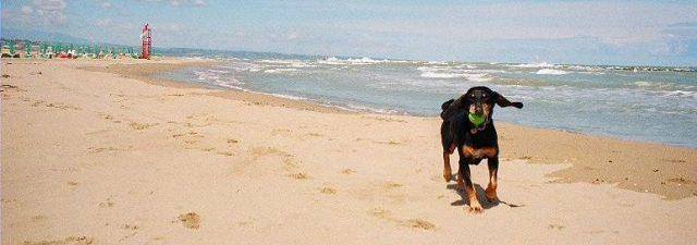 stracci cane - addestramento cani roma