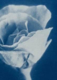 cianotipia---Branco-Ottico05