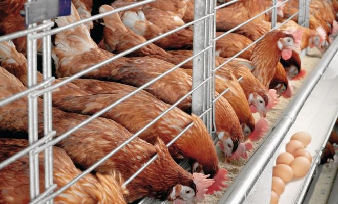 Poultry farmers