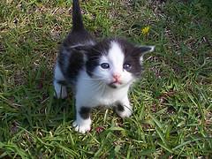 kitten, by Clevergrrl