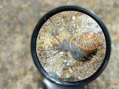 escargot / snail, by OliBac