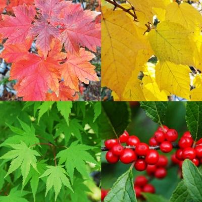 all trees catalog image