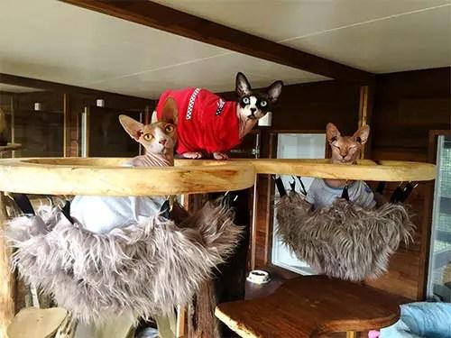 bespoke-cat-tree-hammock-4