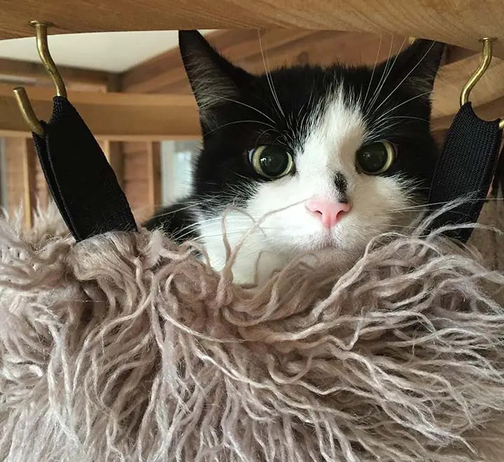 cat-hammock-brankley-cattery-1