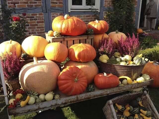Fall Leaves And Pumpkins Wallpaper Ozarks Fall Festivals Schedules Amp Guides