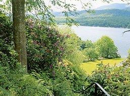 Lake District Fern Garden