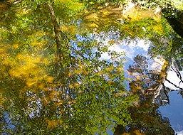 Cumbrian Moorland Garden