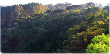 Resultado de imagem para reserva ambiental brasil