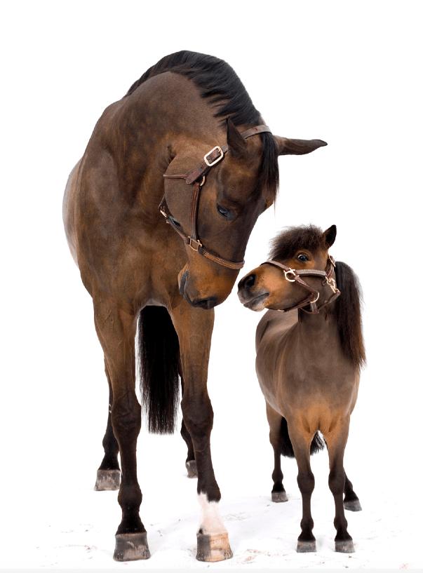 Athos & Gambler, Shelli Breidenbach Horse Photography