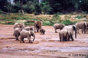 African-Elephants-03.jpg