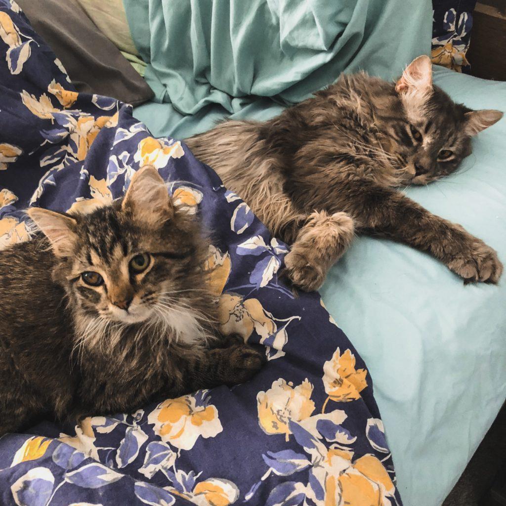 Grigio and Bacio Laying Together