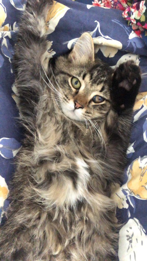 Bacio on the Bed