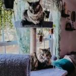 Grigio & Bacio On A Cat Tree