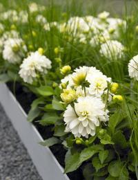 Blumenfreude06