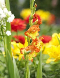 Blumenfreude13